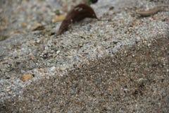Tekstura szarość kamień z suchymi liśćmi zdjęcia royalty free