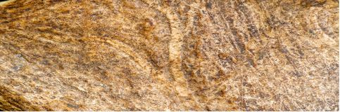 Tekstura, tło, wzór Łosiów amerykańskich rogi odrzucają wiosnę zdjęcia stock