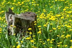 Tekstura, tło, wzór Krajobrazowa wiosna Stary fiszorek, fl Fotografia Stock