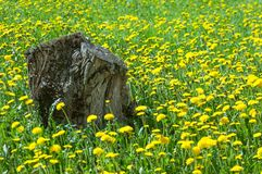 Tekstura, tło, wzór Krajobrazowa wiosna Stary fiszorek, fl Obrazy Royalty Free