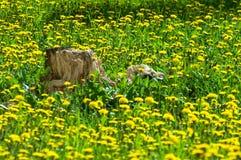 Tekstura, tło, wzór Krajobrazowa wiosna Stary fiszorek, fl Zdjęcia Royalty Free