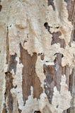 Pionowo tekstura termity Obrazy Stock