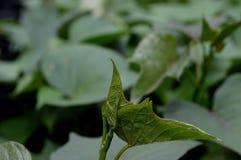 Tekstura tropikalni zieleni liście i kształt zdjęcia stock