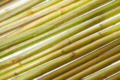 Tekstura trzony rośliny Zdjęcie Stock