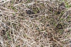 Tekstura więdnąca trawa Obraz Royalty Free