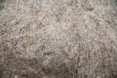 Tekstura wooly odczuwany materiał Obraz Royalty Free