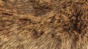 Tekstura wysoka rozdzielczość futerko - lis - zdjęcia stock