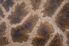 Tekstura, wzór na skórze żyrafa Fotografia Royalty Free