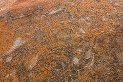 Tekstura Złoty żółty pomarańczowy liszaj na skałach przy Wybitnym Ro Zdjęcia Stock