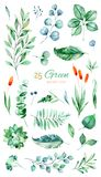 Tekstura z zielenią, sukulent, liście, tropikalni liście, ulistnienie ilustracja wektor