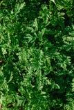 Tekstura zieleń opuszcza backlit światłem słonecznym z cieniem obraz stock