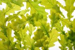 Tekstura zielony liść obrazy royalty free