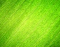 Tekstura zielony liść. Natury tło Fotografia Stock