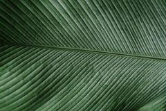 Tekstura zielony liść w naturze Abstrakcjonistyczny tło kreskowy klepnięcie Obraz Stock