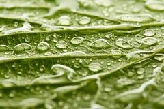 Tekstura zielony liść z kroplami woda Zdjęcie Royalty Free