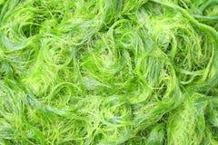 Tekstury świeży zielony spirogyra, Zygnematales, Może być kucharzem, Lokalny jedzenie północny w Tajlandia obrazy stock