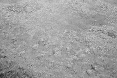 Tekstury abstrakcja woda i algi przy dnem drenujący staw Czarny i biały wizerunek zdjęcie stock