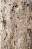 Tekstury barkentyna Zdjęcia Royalty Free
