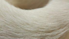 Tekstury biały zwierzęcy futerko obrazy royalty free