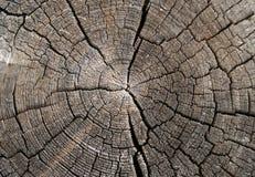 tekstury drewna Obraz Stock