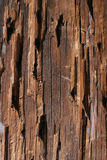 tekstury drewna Fotografia Royalty Free