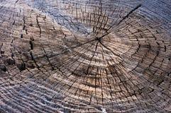 Tekstury drewna rżnięty drzewny bagażnik dla tła Zdjęcie Royalty Free