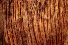 tekstury drewno Zdjęcia Stock