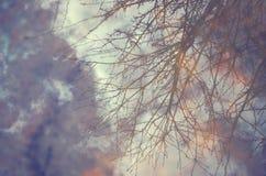 Tekstury drzewa wody chmury Obrazy Stock