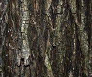 tekstury drzewo Obrazy Stock