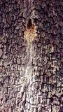 Tekstury drzewo Zdjęcia Stock