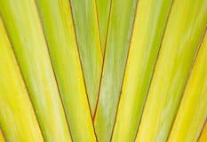 Tekstury i wzoru szczegółu bananowy fan Zdjęcie Stock
