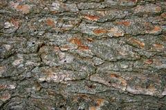 tekstury korowaty drzewo Fotografia Stock