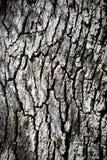 tekstury korowaty drzewo Obraz Stock