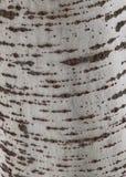tekstury korowaty drzewo Obraz Royalty Free