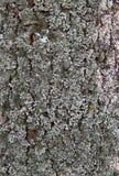 tekstury korowaty drzewo Zdjęcia Royalty Free
