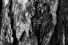 tekstury korowaty palmowy drzewo Naturalny tło Zdjęcia Stock