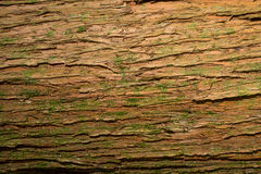 tekstury korowaty stary topolowy drzewo Obrazy Royalty Free