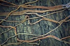 tekstury korzeniowy drzewo Obrazy Stock