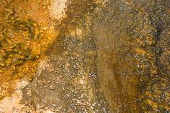 Tekstury Organicznie Deseniowy tło Fotografia Stock