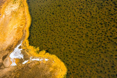 Tekstury Organicznie Deseniowy tło Zdjęcie Royalty Free