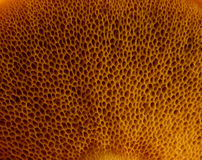 Tekstury pieczarka zdjęcia stock
