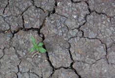 Tekstury pęknięcia ziemia od gorącej pogody Zdjęcie Stock