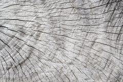 tekstury popielaty stary drewno Drzewo okręgi ciący Szarość cembrują z wietrzeć krekingowymi liniami Fotografia Stock