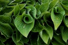 Tekstury roślina z wodnymi kropelkami obrazy stock