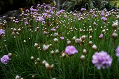 Tekstury roślina z wodnymi kropelkami obrazy royalty free