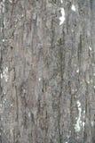 9 04 2018 tekstury stary drzewo Obrazy Stock