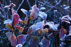 Tekstury tło, wzór Mróz na sprigs trawa depozyt mali biali lodowi kryształy tworzył na ziemi lub inny obrazy royalty free