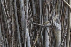 Tekstury tło korzeniowy drzewo Obrazy Stock