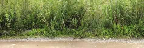 Tekstury trawa na krawędzi wiejskiej drogi Zdjęcie Royalty Free