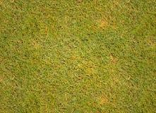 Tekstury trawy pola golfowego tło Zdjęcie Royalty Free